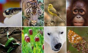 Biodiversity-100-006
