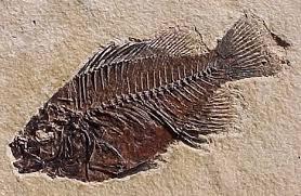Απολιθώματα, τι συνέβη στο παρελθόν;;;