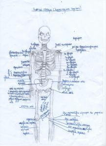 οστά1